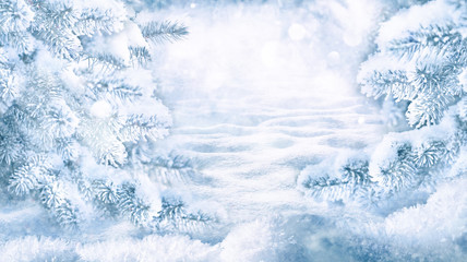 Winter Christmas scenic landscape on frosty sunny day in forest. Snowy backdrop with fir-trees covered with snow close-up, snowdrifts on nature outdoors, copy space, toned blue.