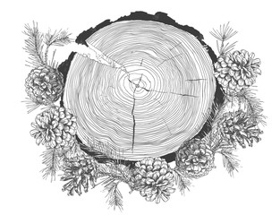 Realistic Botanical ink sketch of fir tree branches with pine cone and tree growth rings trunk isolated on white background.