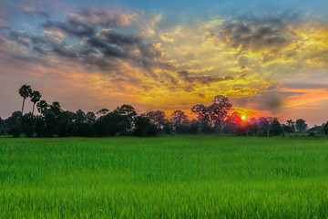 Abstract soft blurred and soft focus silhouette of the sunset with the green paddy rice field, the beautiful sky and cloud in the evening in Thailand