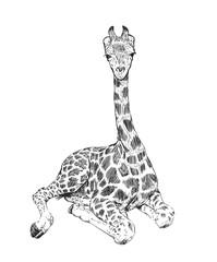 Hand drawn giraffe, sketched