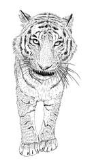 Foto op Canvas Hand getrokken schets van dieren Hand drawn vector black and white tiger