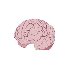 Human brain. Graphic illustration
