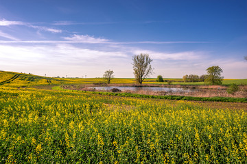 Rapsfeld in der Uckermark