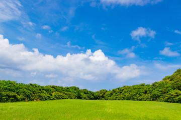 Fototapeta 沖縄石垣島の草原風景 obraz