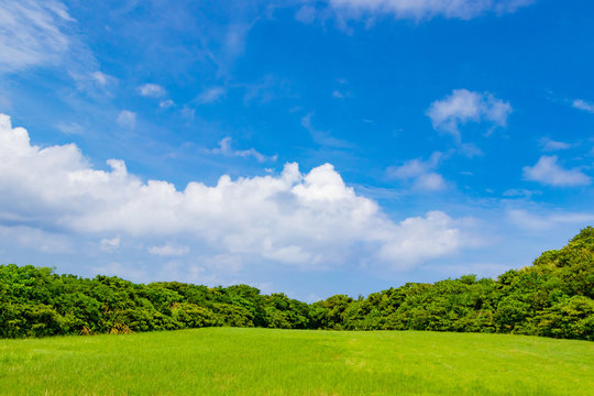 沖縄石垣島の草原風景