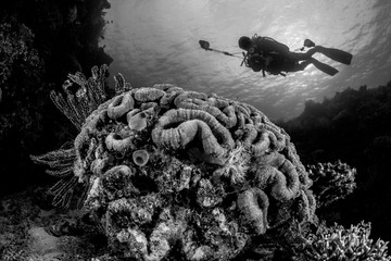 reef coral formation with diver