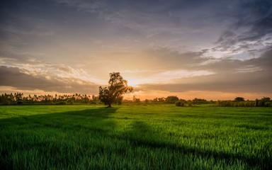 sunset sky field grass landscape