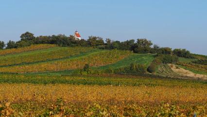Weingärten bei Gumpoldskirchen