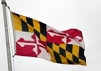 Maryland State Flag Waves in the Wind