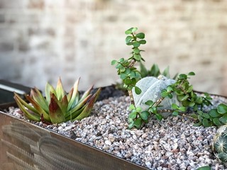 Small succulents in a planter in front of a brick wall