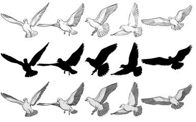 Flying pigeons Vector illustration set. Black and white