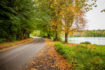 A road on an autumnal day, with fallen leaves  in Shearwater, Wlitshire