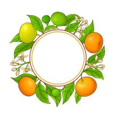 tangerine vector frame