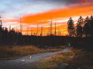 Orange sky in the forest