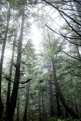 trees in the rain forest in the pacific northwest