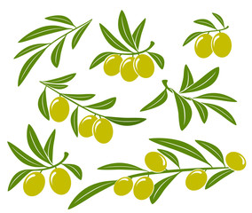 olive branches set with green olives on white