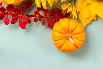 one orange pumpkin with fall leaves and berries, flat lay scene with copy space