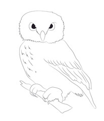 owl stands drawing lines, vector