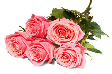 Five pink roses on white background, isolated