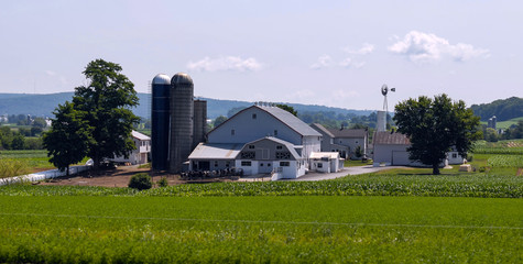 Amish Farm Landscape A