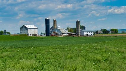 Amish Farm Landscape C