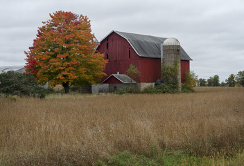 Red Barn with Autumn Orange Tree