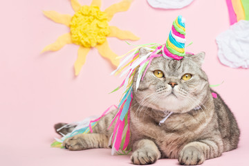 Big Scottish or British gray cat in the role of a unicorn, with a rainbow horn on a pink background, a fairy tale concept, colorful photography