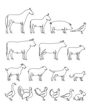 Vector continuous line farm animals silhouettes