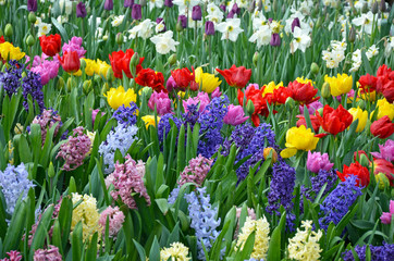 Beautiful spring garden filled with color