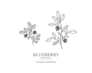 Hand drawn blueberry set.