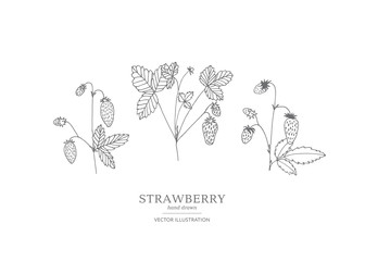Hand drawn strawberry set.