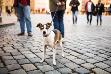 A man walks with a dog in the city center. A lonely dog with beautiful eyes looks at passersby in a square in Germany