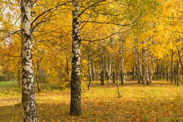 Autumn. Gold Trees in a park