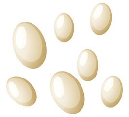 Flea eggs white background