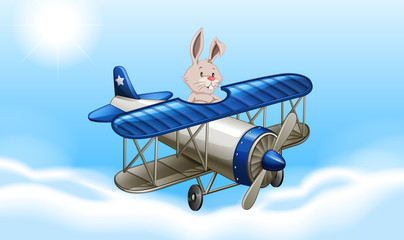 Rabbit flying an airplane