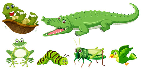 Set of green animal