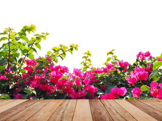 Wall Mural - Wooden table top over pink Bougainvillea flower isolated