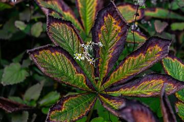 Kastanienblätter in Herbstfarben