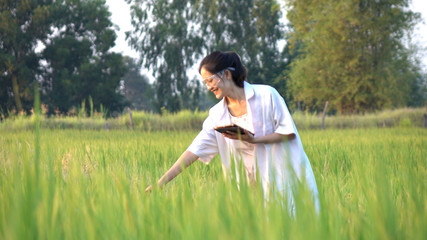 Scientist in the rice field Wall mural