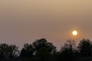 Sunset with sand suspended in the atmosphere, coluring the sky red, over some trees silhouettes and power lines