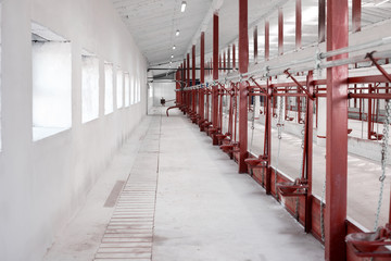 Interior of a new modern empty cowshed. Agriculture industry, farming and animal husbandry