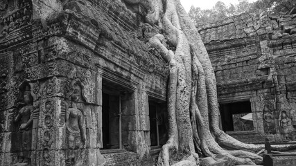 The so-called 'Tomb Raider Temple', Ta Prohm is cloaked in dappled shadow, its crumbling towers and walls locked in the slow muscular embrace of vast root systems.