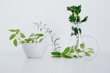 Organic botany and laboratory glassware.  Alternative herb medicine concept