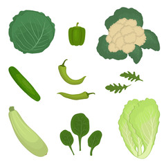 Set of green vegetables, isolated on a white background. There is a zucchini, cucumber, peppers, cabbage, cauliflower, chinese cabbage, spinach, arugula in the picture. Food icons. Vector illustration