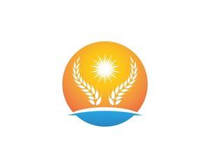 Wheat rice icon logo vector