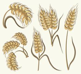Set of simple wheats ears icons