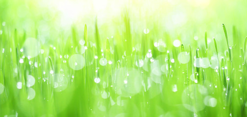 Fresh green grass with dew drops in sunshine on auttum and bokeh. Abstract blurry background. Nature background. Texture. copy space.