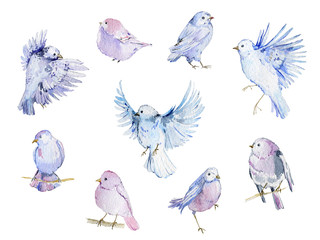 Watercolor birds collection. Isolated elements on white background.Hand drawn illustration in pastel colors