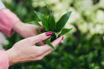 Girl hold in hands dracaena janet craig. Green plant shop.