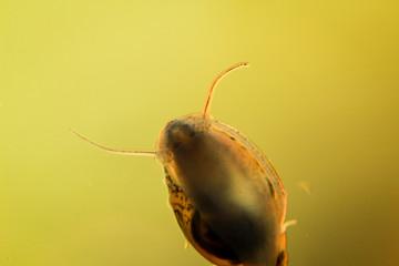 Detailansicht kleiner Schnecken im Aquarium
